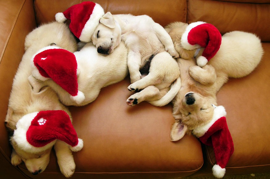 Top Ten Christmas Gifts for Your Dog
