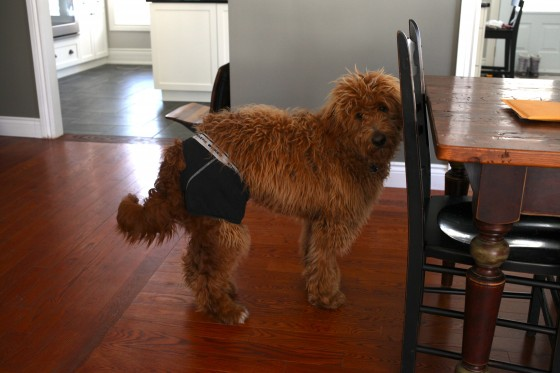 Long Underwear For Dogs Family Clothes